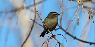 Winter Bird Walk with Gregg Gorton-John Heinz NWR