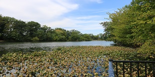 Haddon Lake Park